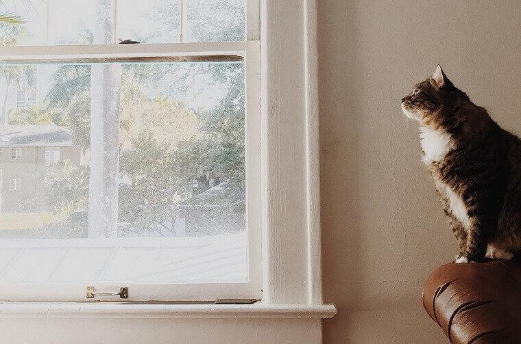 開いた窓を眺める猫
