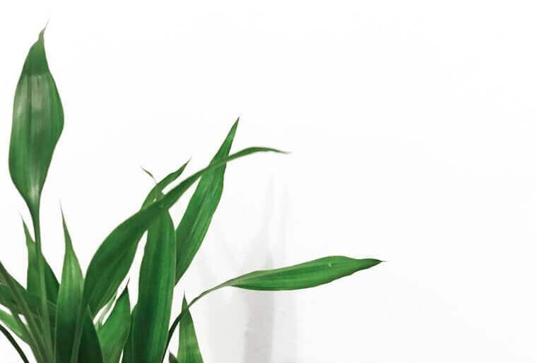 白い壁紙に緑の観葉植物