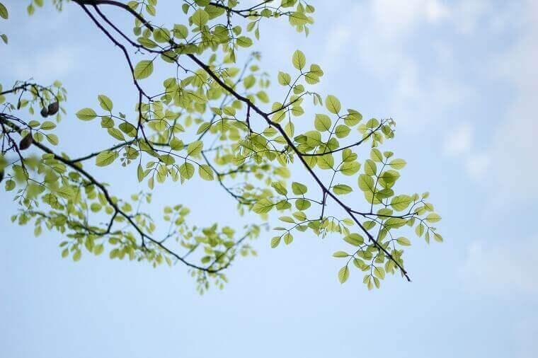 青空をバックに新緑