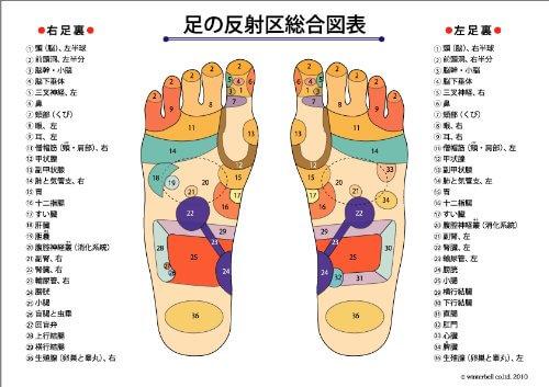 足の反射区総合図表